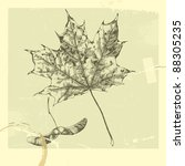 botanical set  vintage highly... | Shutterstock .eps vector #88305235