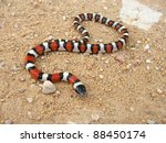 Coral Snake   A Mimic ...