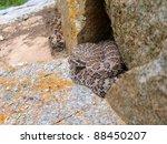 Постер, плакат: A venomous snake the