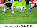 Spanish Water Dog In Agility...