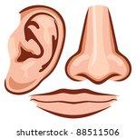 vector illustration nose  ear ... | Shutterstock .eps vector #88511506