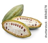cacao fruits isolated against white background. - stock photo