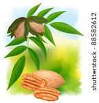 Pecan Nuts With Leaves. Vector...