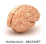 Human Brain 3d Model  Isolated