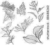 set of floral design elements ... | Shutterstock .eps vector #88688260