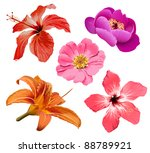 flowers bloom | Shutterstock . vector #88789921