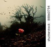 Red Rose Growing Through Soil...