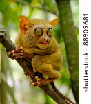Small photo of Tarsier on the tree. Bohol island, Philippines.