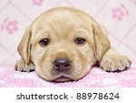 Stock photo close up of little puppy 88978624
