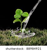 Young Green Plant With Water O...