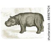 The Hippopotamus   Vintage...