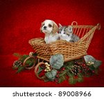 Stock photo christmas puppy and kitten sitting in a sled with copy space on a red background 89008966