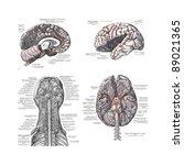 4 views of the human brain ... | Shutterstock . vector #89021365