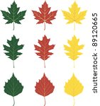 The Leafs Of Maple  Oak And...