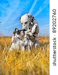 Stock photo dalmatian dog and french bulldogs playing 89202760