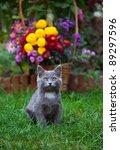 Grey Little Kitten Posing...