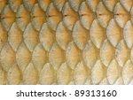 fish scales macro closeup | Shutterstock . vector #89313160