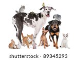 Stock photo group of dogs cats birds mammals and reptiles in front of a white background 89345293