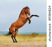 Bay Horse Rearing Up On The...