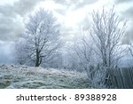 Trees in misty, gloomy winter day. Pasterka village in Poland. Beginning of winter. - stock photo