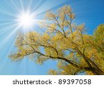Tall Yellow Tree Under Sun ...