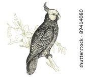 Cockatoo    Vintage Engraved...