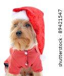 christmas yorkie in christmas...   Shutterstock . vector #89421547