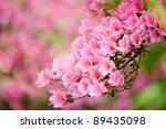 Pink Azalea In The Garden