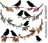 Set Of Birds Silhouettes  Birds ...
