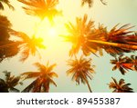 Palm Trees And Yellow Sun In A...