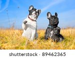 Stock photo two french bulldog puppies in a field 89462365