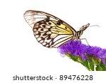 idea leuconoe on violet flower... | Shutterstock . vector #89476228