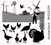 vector illustration farm birds | Shutterstock .eps vector #89533159