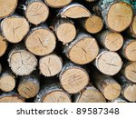 A Pile Of Wood In A Forest
