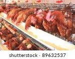 chicken hens eggs in farm - stock photo