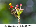 Caterpillar On The Flower