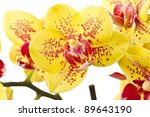 yellow with red spots on white... | Shutterstock . vector #89643190