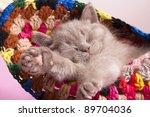 Stock photo sleeping kitten 89704036