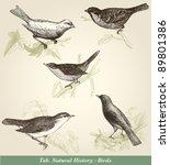birds   vintage engraved... | Shutterstock .eps vector #89801386