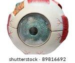 Eye model - stock photo