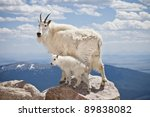 A Pair Of Mountain Goats Stand...