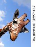 Portrait Of A Nice Giraffe