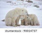 polar she bear with cubs. the... | Shutterstock . vector #90014737