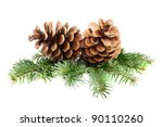 Two Pine Cones With Branch On ...