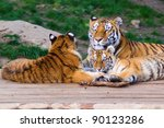 tiger family  mother and cubs   Shutterstock . vector #90123286
