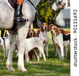 Dogs Of The Middleburg Hunt...