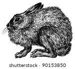 hare   Shutterstock . vector #90153850