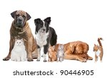 Stock photo group of cats and dogs in front of a white background 90446905