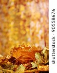 dry autumn maple leaves on... | Shutterstock . vector #90558676