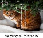 Bengal Kitten Sleeping Under An ...